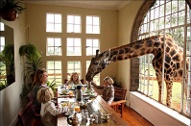 Giraffe à table